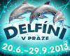 DELFÍNI V PRAZE - Plavání s delfíny